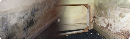Effects of rising damp. Damp control will help stop damp related issues in your home or business